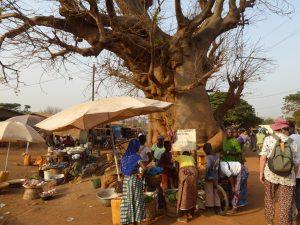 Baobab in Bassar